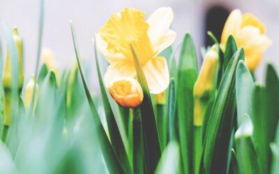 Glad påsk till er alla!
